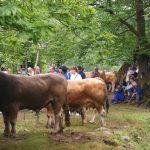 La matanza tradicional. Una tradición que pervive en los pueblos de los Picos de Europa